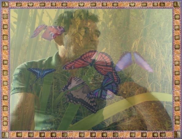Graceful_Butterflies